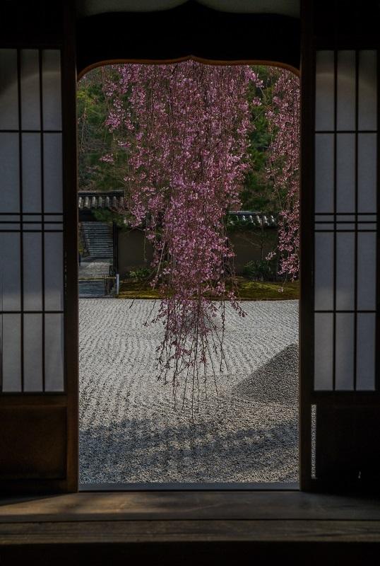 圧倒的桜。平成FINAL_e0363038_14220395.jpg