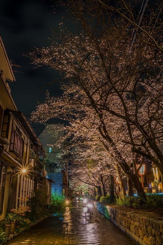 圧倒的桜。平成FINAL_e0363038_14265188.jpg