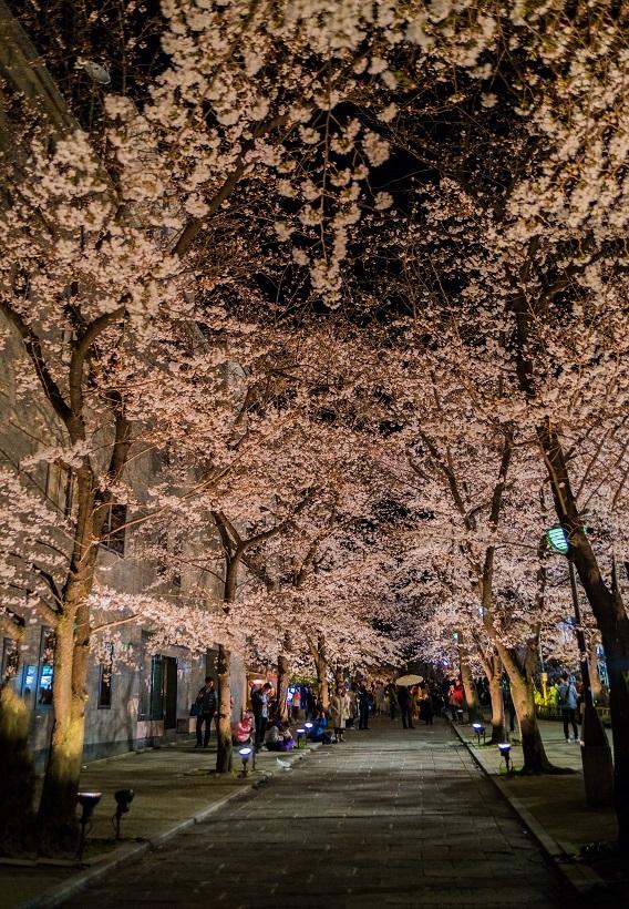圧倒的桜。平成FINAL_e0363038_14265906.jpg