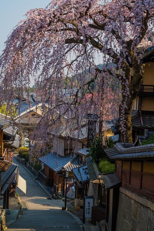 圧倒的桜。平成FINAL_e0363038_14334185.jpg
