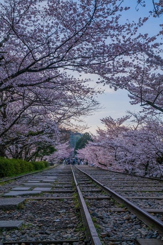 圧倒的桜。平成FINAL_e0363038_14341876.jpg