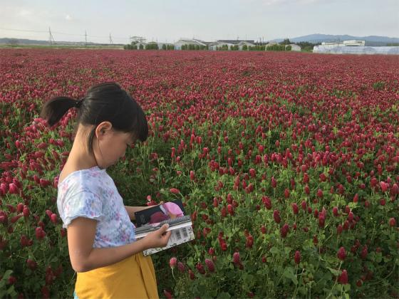 ひまわり村のお花_a0210340_18495258.jpg