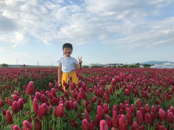 ひまわり村のお花_a0210340_18495289.jpg
