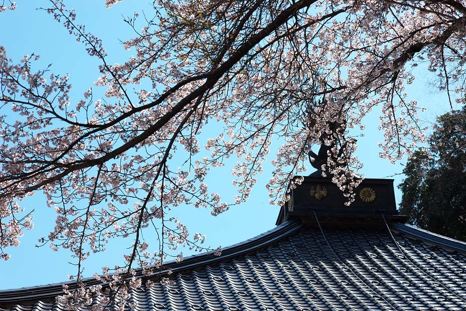 圧倒的桜。平成FINAL_c0067040_20281603.jpg