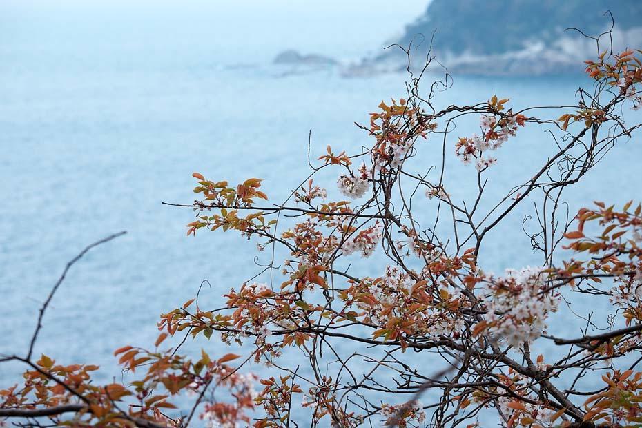 圧倒的桜。平成FINAL_c0067040_20303125.jpg