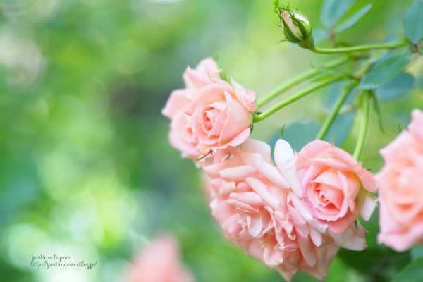 薔薇の香り_e0268051_23505666.jpg