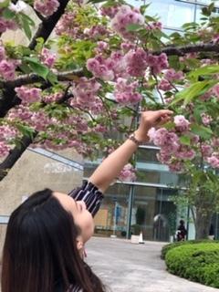 桜を楽しみました(5/16)_c0200361_18370472.jpg