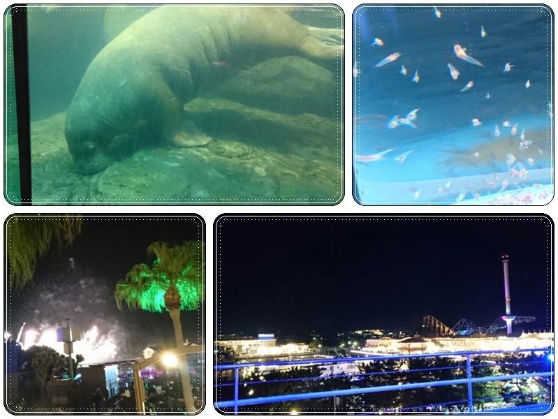 八景島シーパラで花火(7)_b0236665_10332974.jpg
