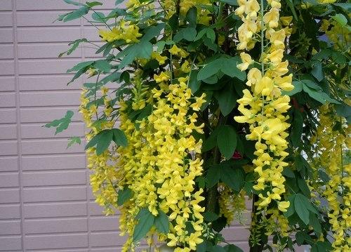 路傍の花、樹々の鳥(344) ~ 美しい花には毒がある ~_b0102572_14451900.jpg