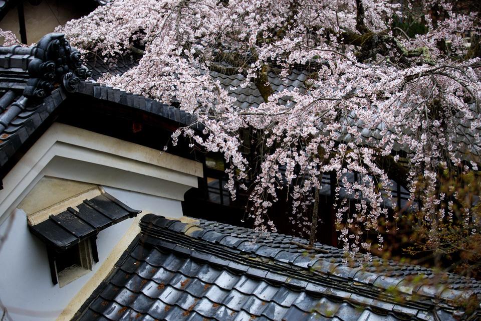 桜 2019!  ~十輪寺~_b0128581_19264697.jpg