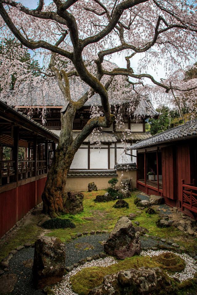 桜 2019!  ~十輪寺~_b0128581_19281490.jpg