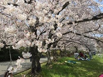平成最後のハシゴ花見 第1弾〜♪_e0123286_16282929.jpg