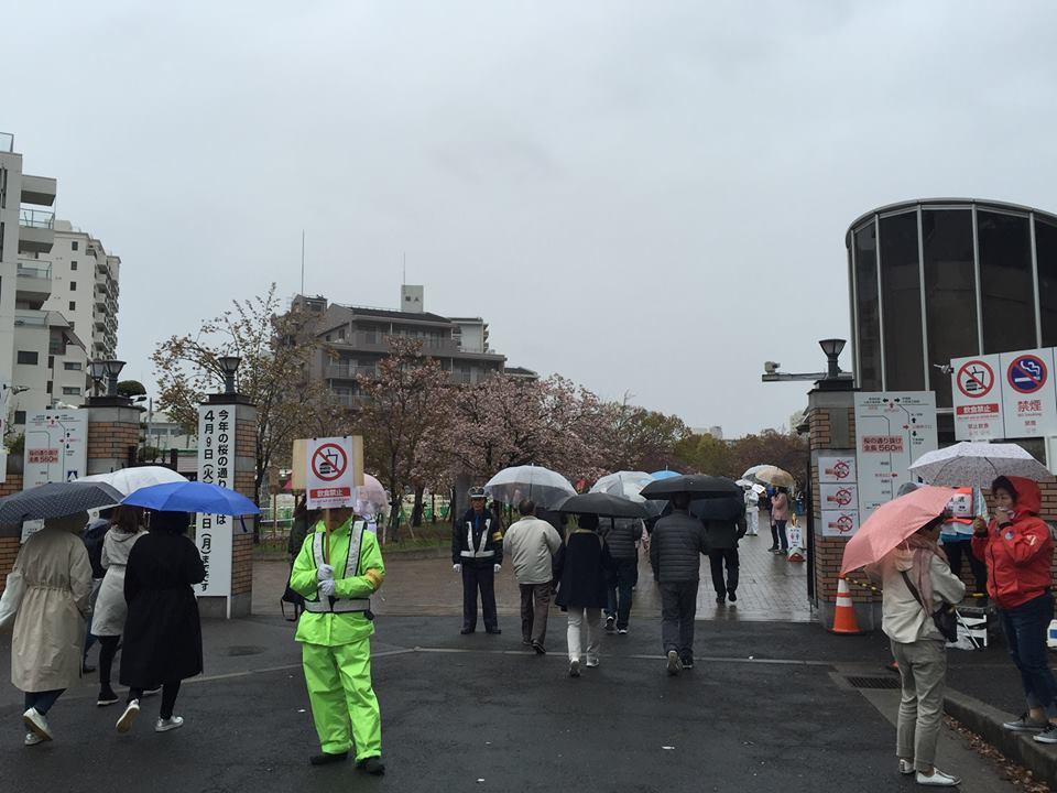 ぼっち花見 造幣局桜の通り抜け〜♪_e0123286_17364375.jpg