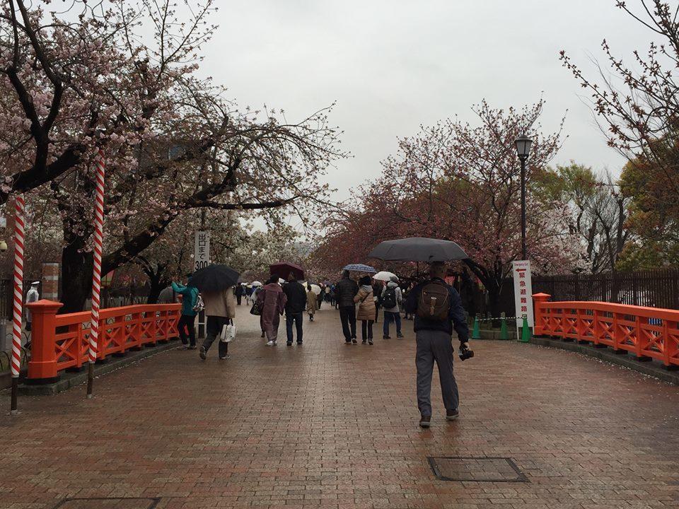 ぼっち花見 造幣局桜の通り抜け〜♪_e0123286_17383290.jpg