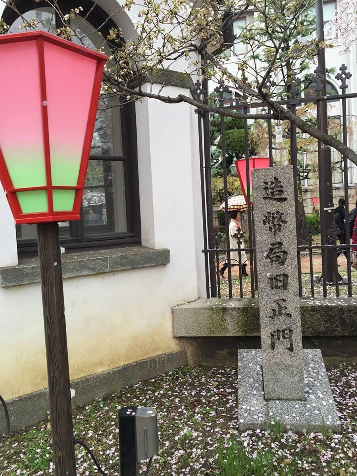 ぼっち花見 造幣局桜の通り抜け〜♪_e0123286_17391351.jpg