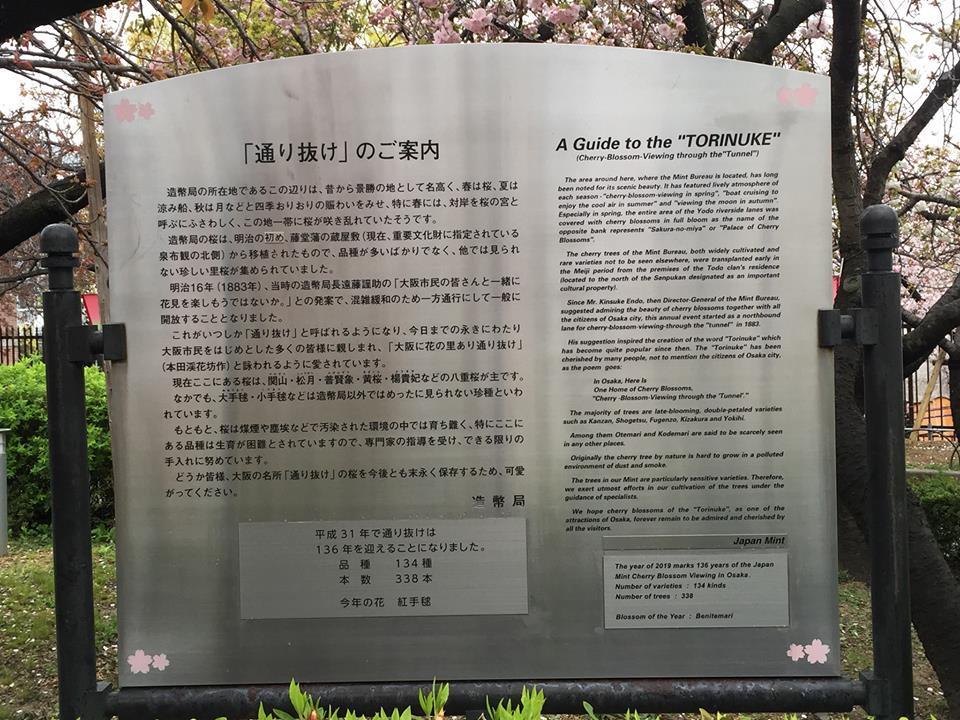 ぼっち花見 造幣局桜の通り抜け〜♪_e0123286_17400163.jpg