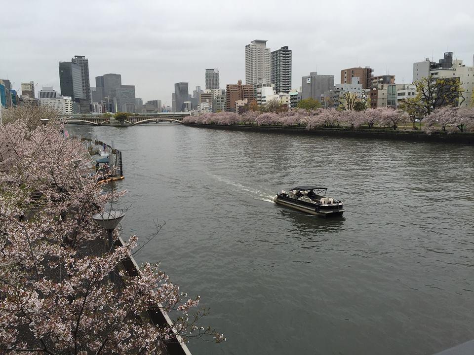 ぼっち花見 造幣局桜の通り抜け〜♪_e0123286_17433410.jpg