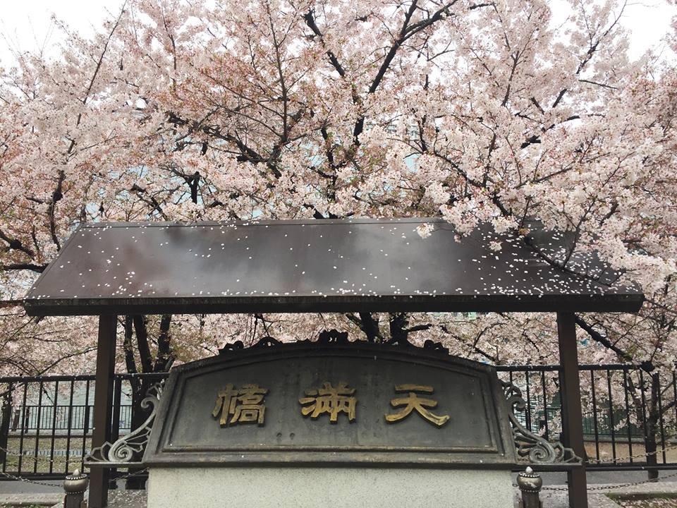 ぼっち花見 造幣局桜の通り抜け〜♪_e0123286_17435257.jpg