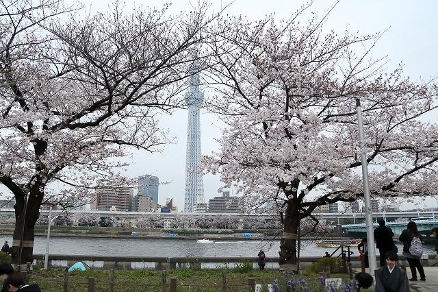 2019年の圧倒的桜を、10枚にまとめてみました_b0291402_08021782.jpg