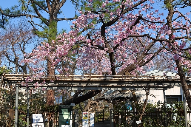 2019年の圧倒的桜を、10枚にまとめてみました_b0291402_08021788.jpg