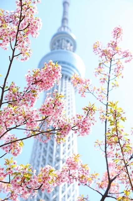 2019年の圧倒的桜を、10枚にまとめてみました_b0291402_08021799.jpg