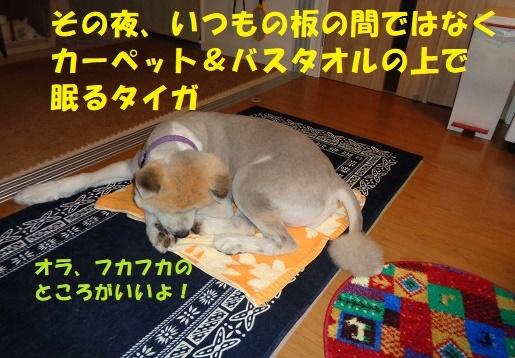 f0121712_14444542.jpg