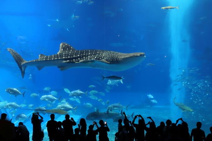 【沖縄美ら海水族館】沖縄旅行 - 6 -_f0348831_07022671.jpg