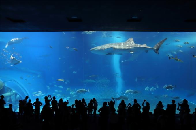 【沖縄美ら海水族館】沖縄旅行 - 6 -_f0348831_07023015.jpg
