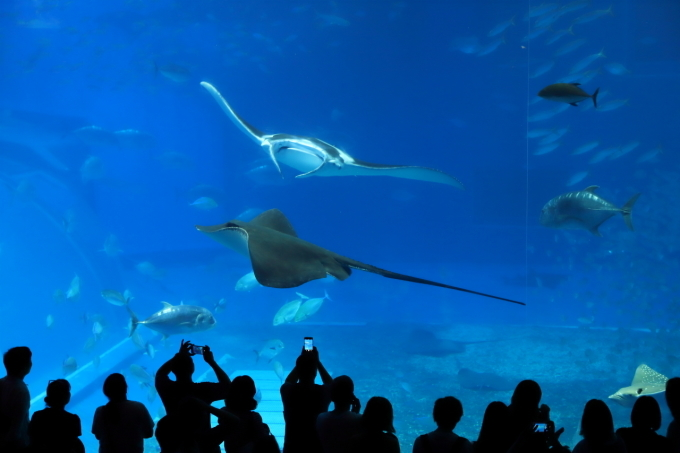 【沖縄美ら海水族館】沖縄旅行 - 6 -_f0348831_07023061.jpg