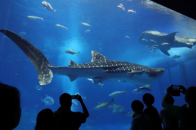 【沖縄美ら海水族館】沖縄旅行 - 6 -_f0348831_07023417.jpg