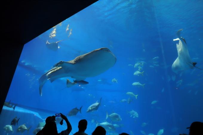 【沖縄美ら海水族館】沖縄旅行 - 6 -_f0348831_07023496.jpg