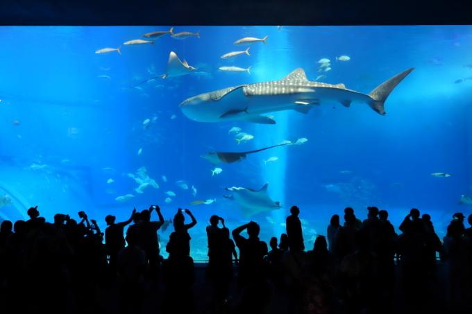 【沖縄美ら海水族館】沖縄旅行 - 6 -_f0348831_07023775.jpg