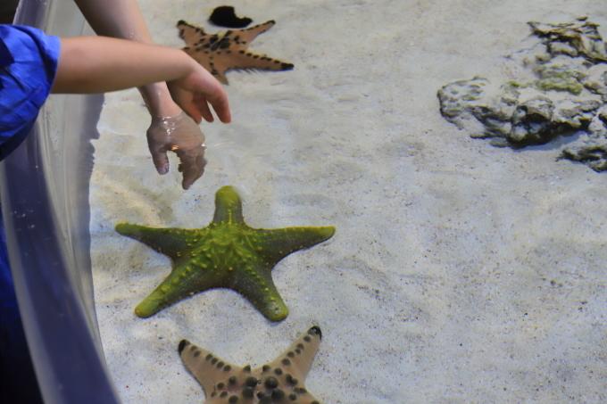 【沖縄美ら海水族館】沖縄旅行 - 6 -_f0348831_07024897.jpg