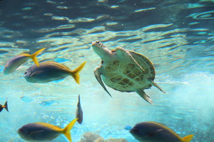 【沖縄美ら海水族館】沖縄旅行 - 6 -_f0348831_07025364.jpg