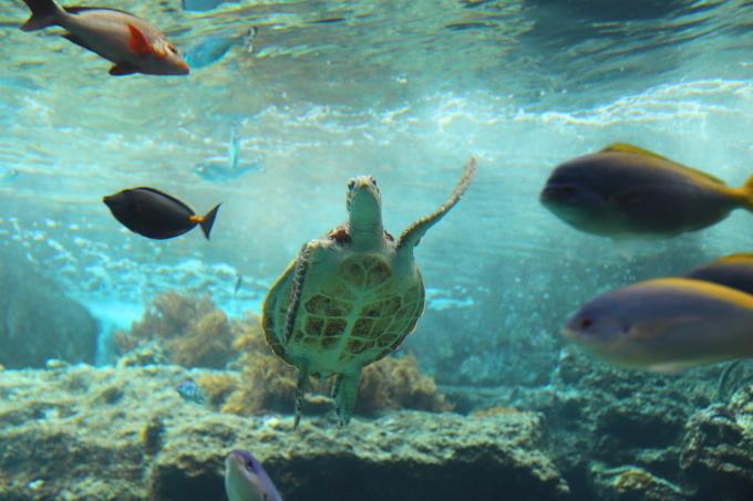 【沖縄美ら海水族館】沖縄旅行 - 6 -_f0348831_07025801.jpg