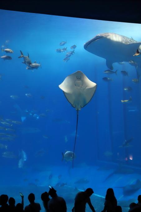 【沖縄美ら海水族館】沖縄旅行 - 6 -_f0348831_07374300.jpg
