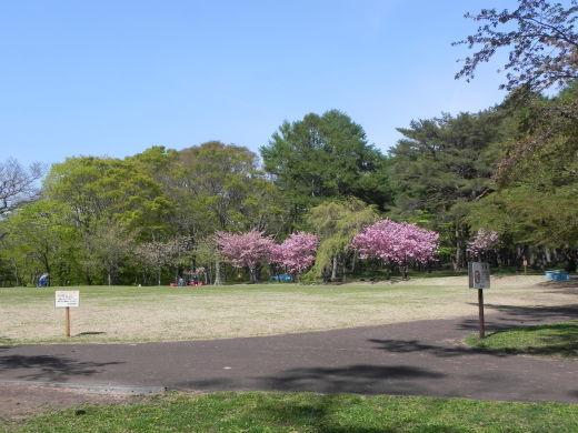 見晴公園だより 花盛り_e0145841_15052923.jpg