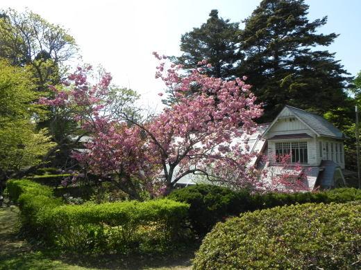 見晴公園だより 花盛り_e0145841_15054681.jpg