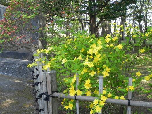 見晴公園だより 花盛り_e0145841_15055985.jpg