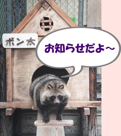 函館公園ニュース  5月17日(金)_e0145841_17113158.jpg