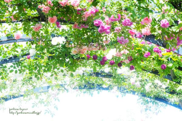 薔薇の香り_e0268051_17050958.jpg