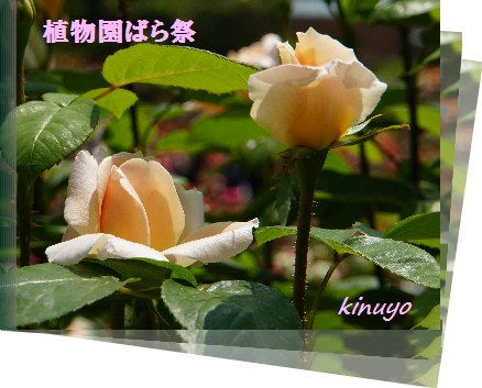 a0340084_15504097.jpg