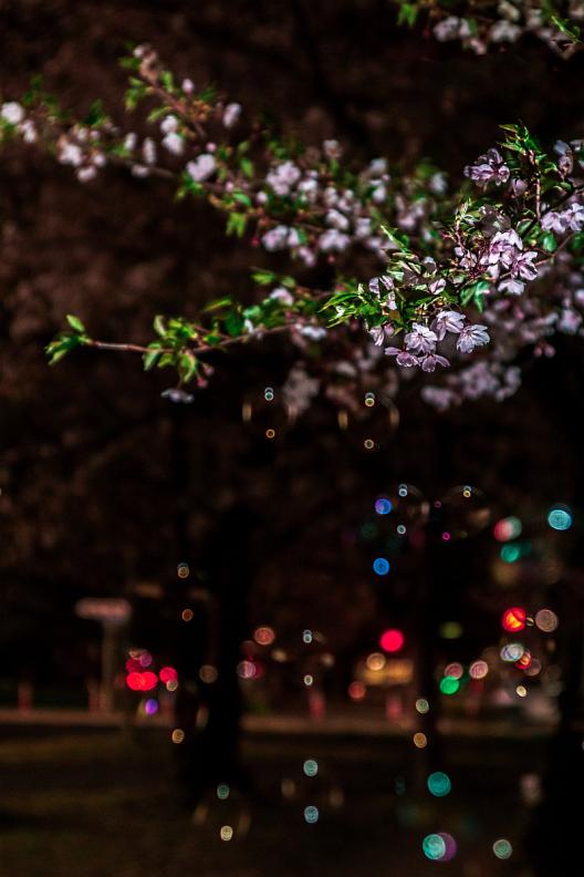 圧倒的桜。平成FINAL_f0189086_19491345.jpg