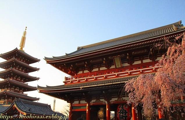 圧倒的桜。平成FINAL 古都の桜と富士の桜_f0374092_19492301.jpg