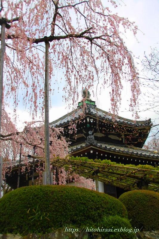 圧倒的桜。平成FINAL 古都の桜と富士の桜_f0374092_20012978.jpg