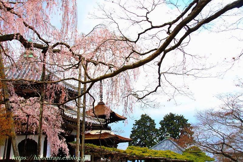 圧倒的桜。平成FINAL 古都の桜と富士の桜_f0374092_20021322.jpg