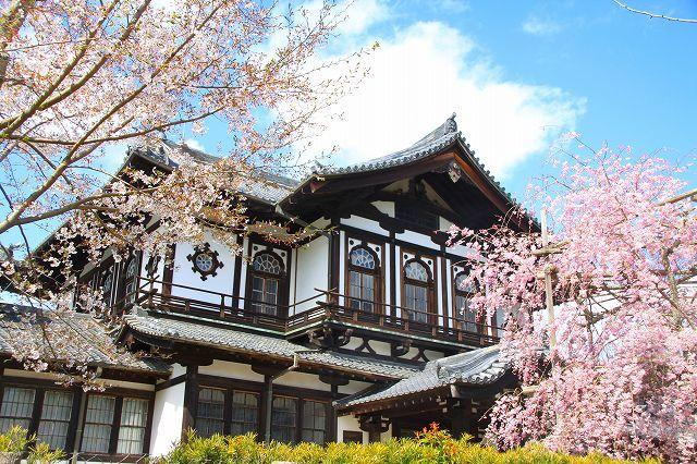 圧倒的桜。平成FINAL 古都の桜と富士の桜_f0374092_20302601.jpg