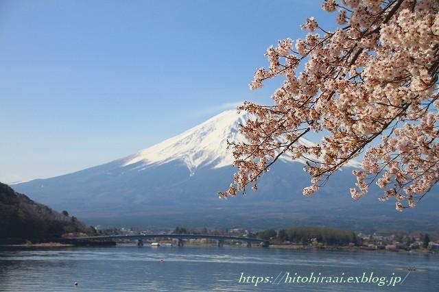 圧倒的桜。平成FINAL 古都の桜と富士の桜_f0374092_20311093.jpg