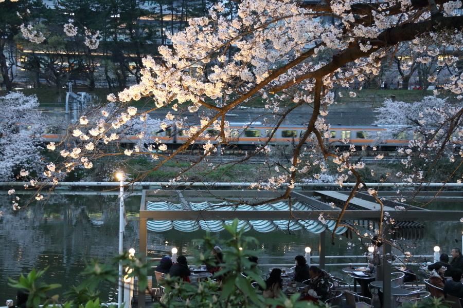 圧倒的桜。平成FINAL_b0190710_00342874.jpg