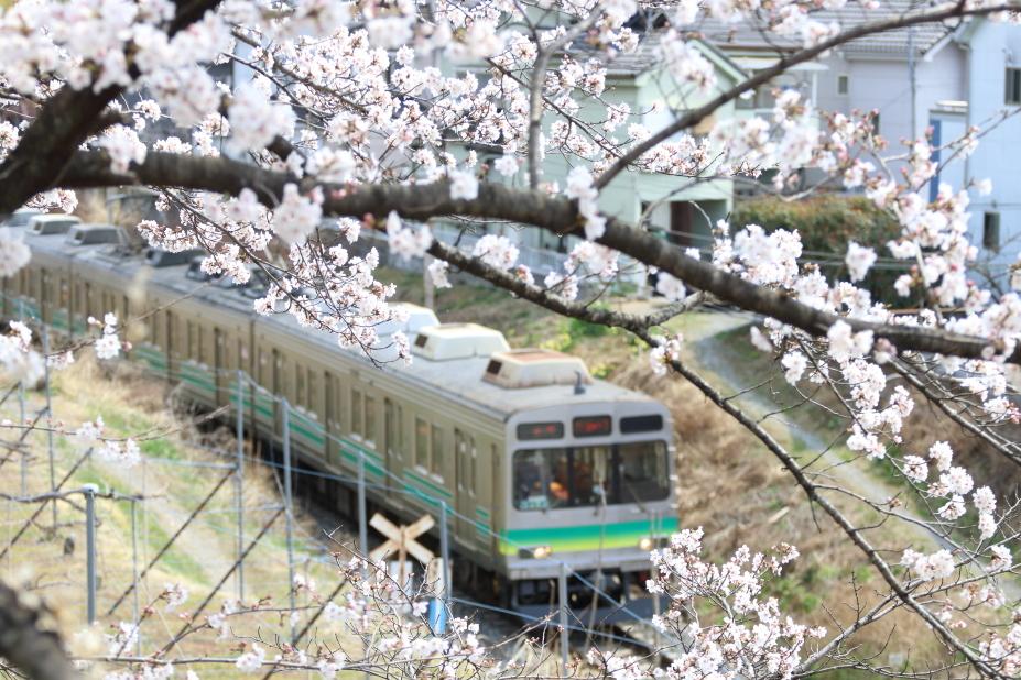 圧倒的桜。平成FINAL(2) 桜咲く駅を通過する汽車_b0190710_18370797.jpg